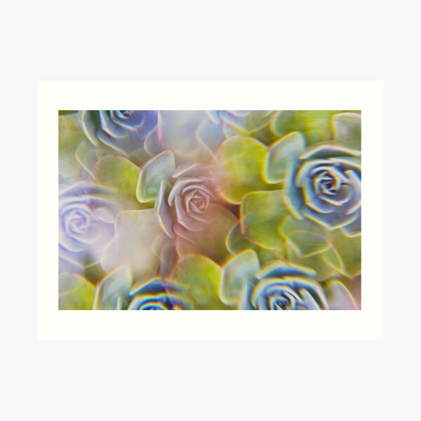 Succulent photographed through prism filter Art Print