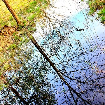 The Secret Life of Water Muddy by CeciliaCarr