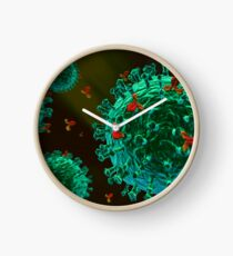antibodys against green fluorescent protein (GFP) virus Clock
