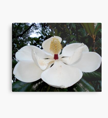 Magnolia Angel Metal Print
