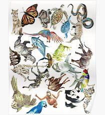 Interconnected Endangered Species Poster