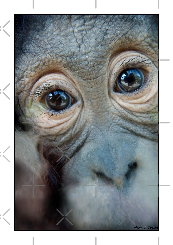 Monkey  by Mark Young