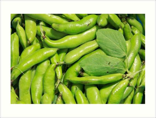 Fava bean pods by Gaspar Avila