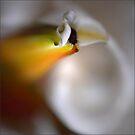 A Flower for Mum by Jerri Johnson