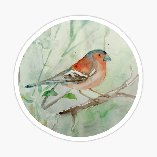 Buchfink / Chaffinch Sticker
