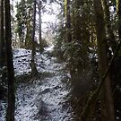 Forest Sun Rays in the Snow #53 by Dawna Morton