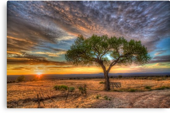 Tree at Sunset by Bill Wetmore