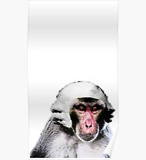 Rhesus Monkey in a Powdered Wig Poster