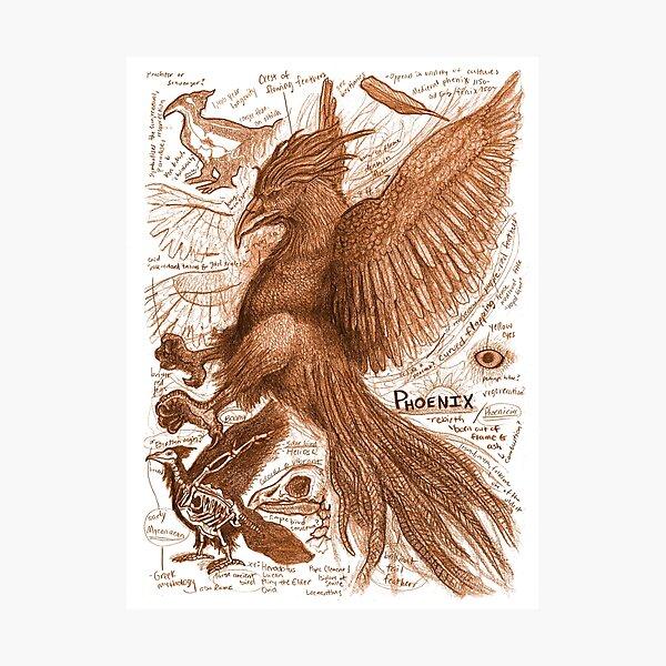 EgertronPuck's Orange Phoenix Anatomy Illustration Photographic Print