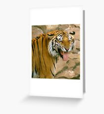 Laughing Cat Greeting Card