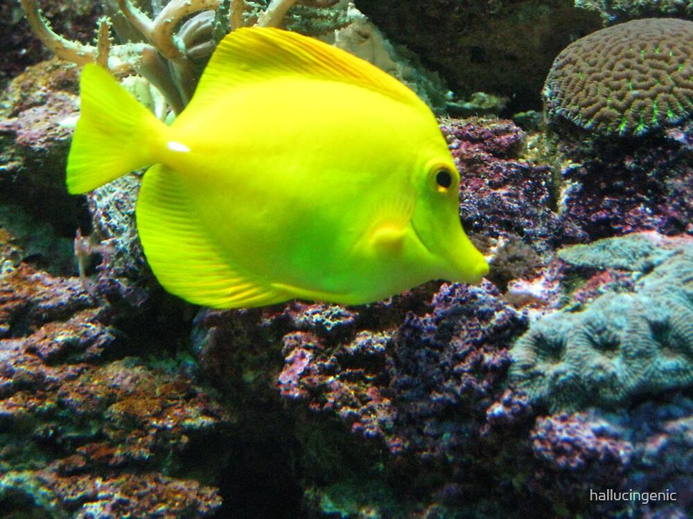Yellow Fish by hallucingenic