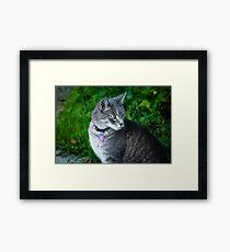 Bethesda cat Framed Print