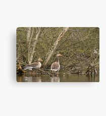 Geese in the marsh Canvas Print