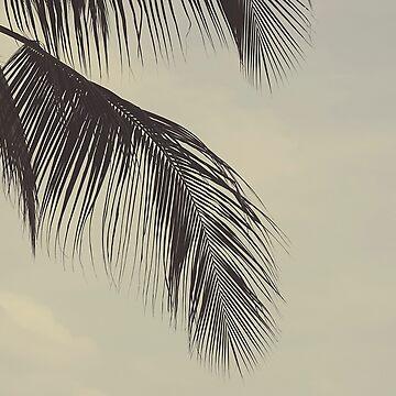 Palm leaf by gailgriggs