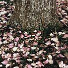 Fallen Petals by Chamika Amarasiri