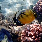 Exotic And Colorful Red Sea World by hurmerinta