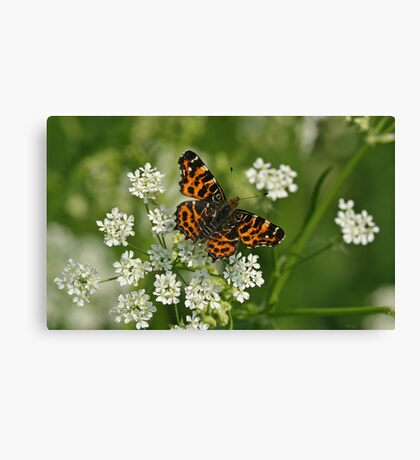 Map Butterfly On Cow Parsley Canvas Print