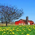 Red Country Barn by Sheri Nye