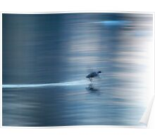 Duck in motion blur Poster