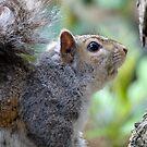 Gray Squirrel in Spring by David Friederich