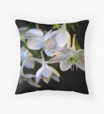 white surprise- Eucharis Grandiflora Throw Pillow
