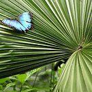 palm orament by Margaret Shark
