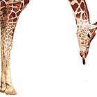 """Licker"" Giraffe Wildlife Animal Watercolor by Paul Jackson"