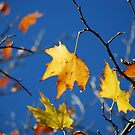 Ahh Autumn by Catherine Davis