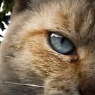 The adventurus eye of a cat by Adara Black