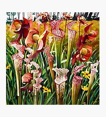 """""""Pitcher Plants"""" Spring Flowers Watercolor  Photographic Print"""
