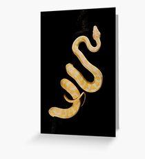 Albino Northern Territory Carpet Python [Morelia spilota variegata] Greeting Card
