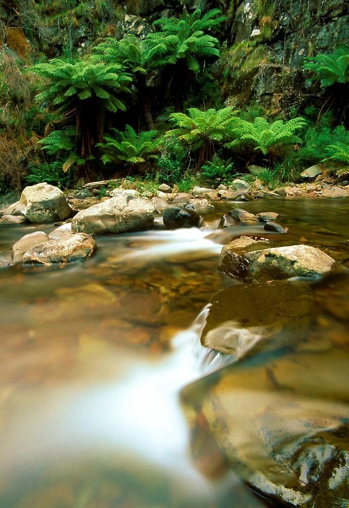 Wongungarra River, Alpine NP by Kevin McGennan