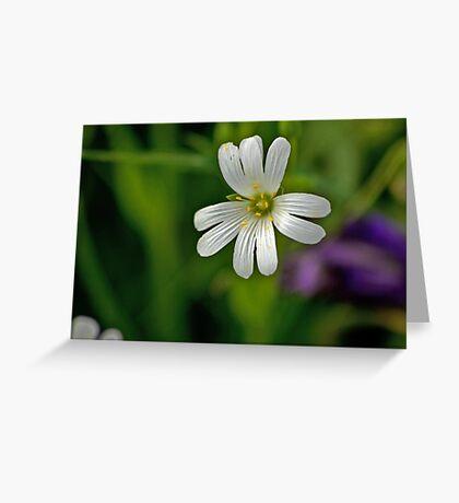 Wild Flowers - Stitchwort Greeting Card