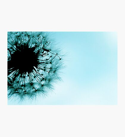 dandelion blue Photographic Print