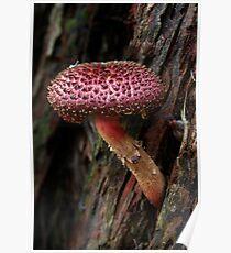 Fungi Season 19 Poster