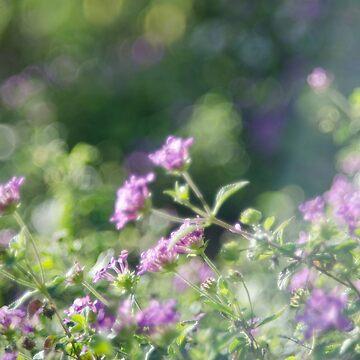 Promise (Magic Garden Series) by discreetpeacock