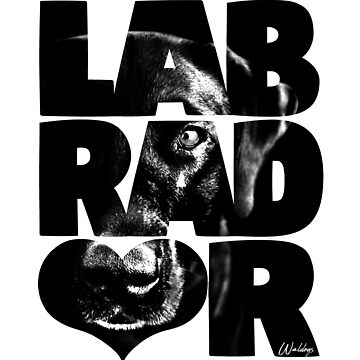 Labrador Retriever Black by waldogs