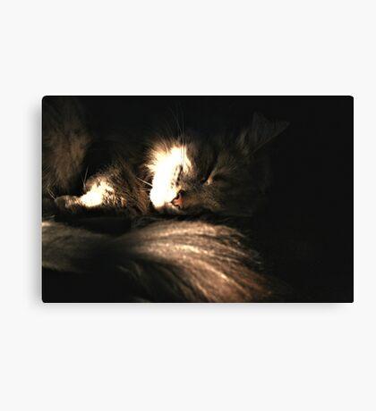 Sleeping Cat In Light Canvas Print