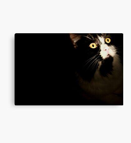 Hiding Cat In The Dark Canvas Print