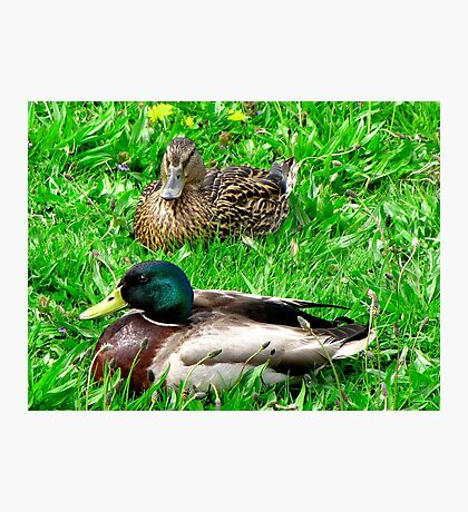 Things are just Ducky here ! Photographic Print