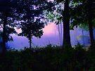 Ozark Enchantment by NatureGreeting Cards ©ccwri
