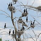 Annual Cormorant Conference by Betsy  Seeton