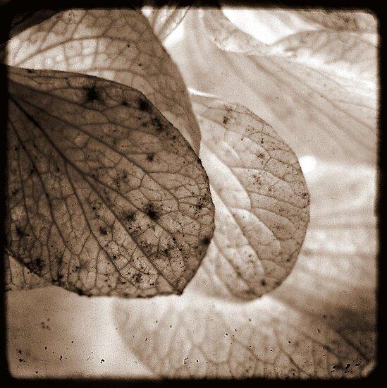 Wings by Kitsmumma