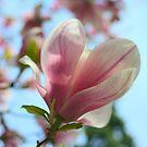 Magnolia by Karen K Smith