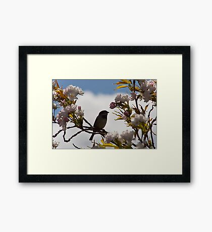 The Sparrow and The Blossom Tree Framed Print