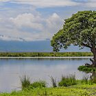 Tanzania. Ngorongoro Conservation Area. Tree at the Lake. by vadim19