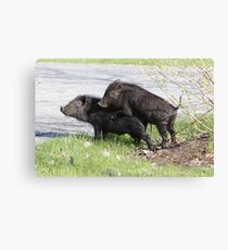 Makin' Bacon. Canvas Print