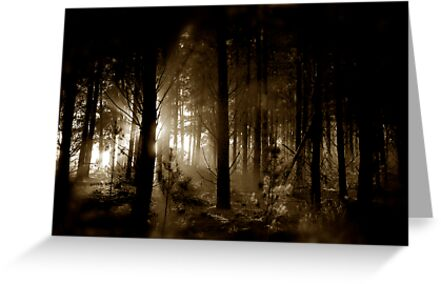 Forest mornings by Steve Chapple