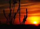 """Deep Dawn Rising"" by debsphotos"