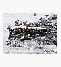 Cold Seagulls (artistic) Photographic Print